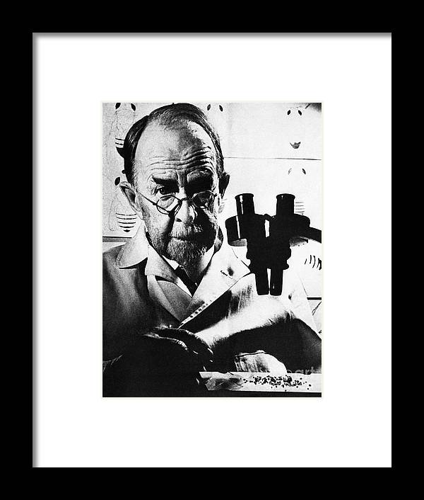 Microscope Framed Print featuring the photograph Thomas Hunt Morgan With Microscope by Bettmann