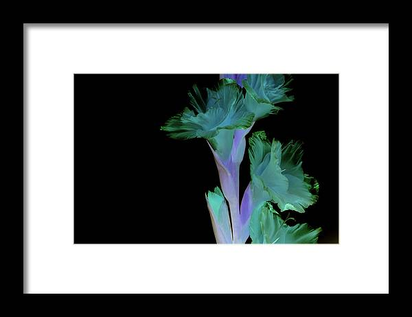 Flowers Framed Print featuring the photograph Thoughts of mardi Gras by Paulina Roybal