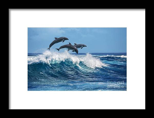 Beauty Framed Print featuring the photograph Three Beautiful Dolphins Jumping by Willyam Bradberry