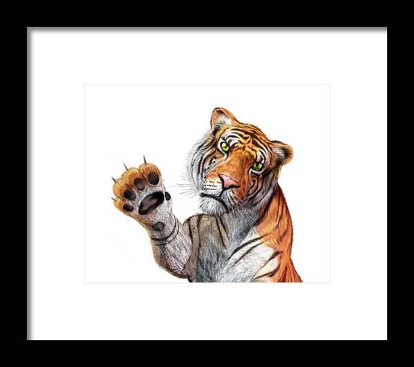 White Background Framed Print featuring the digital art Tiger, Artwork by Leonello Calvetti