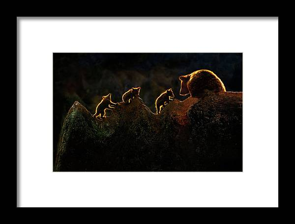 Backlight Framed Print featuring the photograph Time To Play by Xavier Ortega