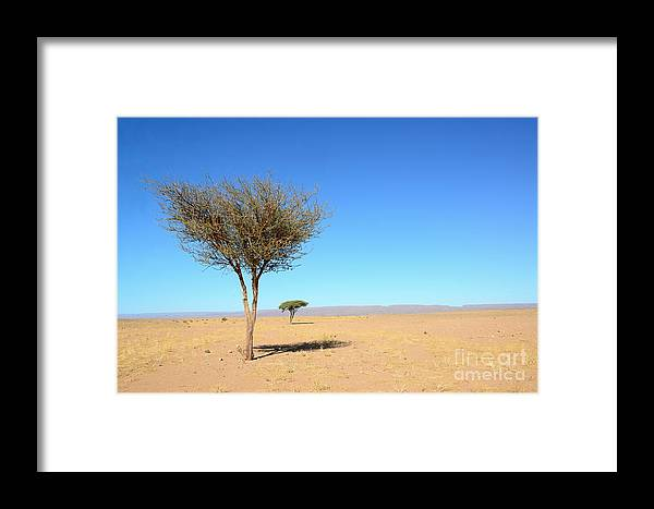 Rural Framed Print featuring the photograph Tree In Sahara Desert In Morocco Near by Procyk Radek