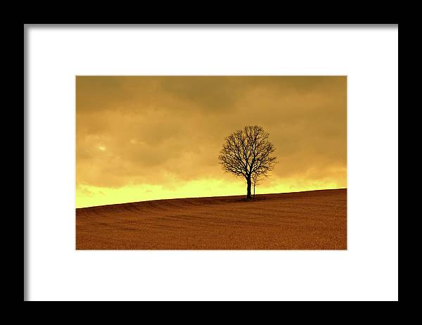 Scenics Framed Print featuring the photograph Tree On Hillside At Dusk Sepia by Driftless Studio