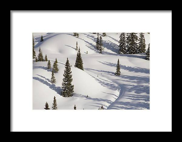 2019 Framed Print featuring the photograph Trees And Shadows by Bridget Calip