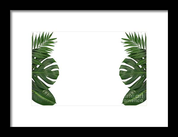 Trendy Tropical Leaves Template Framed Print By Wdnet Studio Download 4,096 tropical leaves free vectors. trendy tropical leaves template framed print