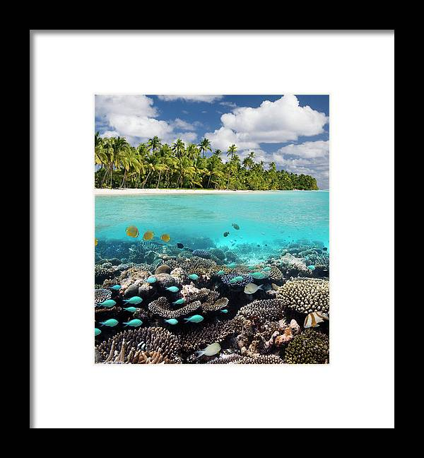 Underwater Framed Print featuring the photograph Tropical Paradise - The Maldives by Steve Allen
