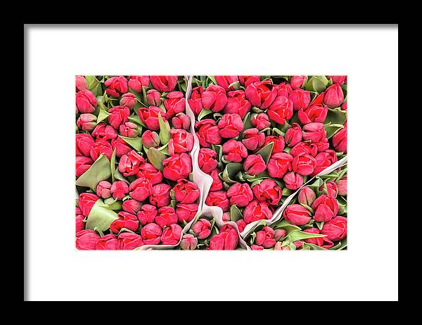 North Holland Framed Print featuring the photograph Tulips For Sale At A Flower Market by P A Thompson