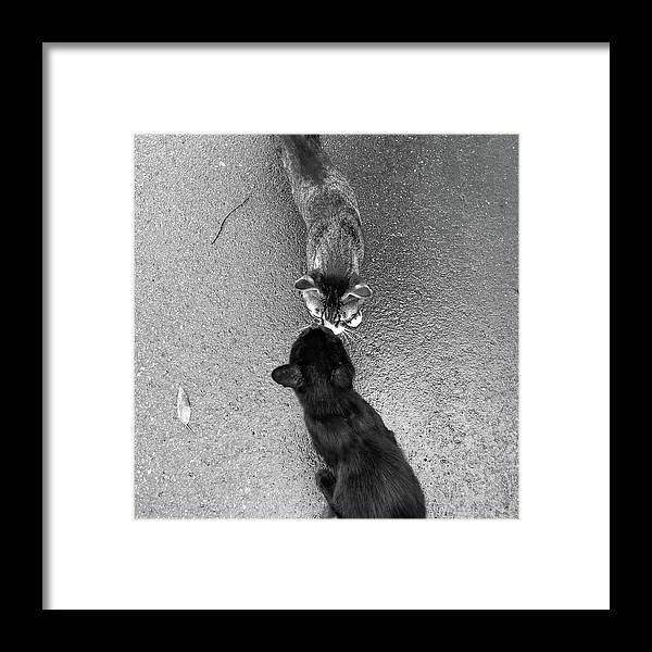 Pets Framed Print featuring the photograph Two Kittens Which Kiss by Photographer, Loves Art, Lives In Kyoto