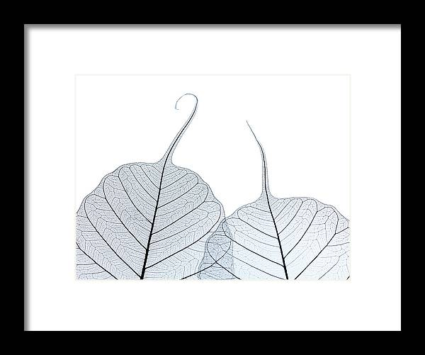 Tranquility Framed Print featuring the photograph Two Leaf Skeletons by Peter Dazeley