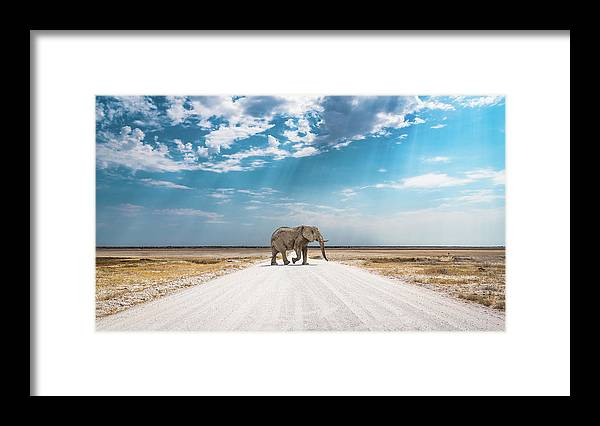 Elephant Framed Print featuring the photograph Under An African Sky by Hamish Mitchell