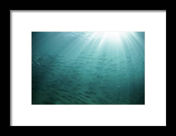 Freedom Framed Print featuring the photograph Underwater Light by Mark Tipple