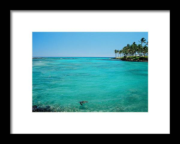 Water's Edge Framed Print featuring the photograph Underwater Turtle In Maui Hawaii Resort by Ejs9