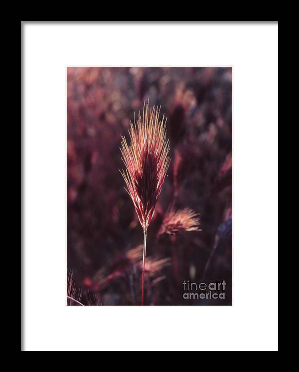 Framed Print featuring the photograph Untitled by Randy Oberg