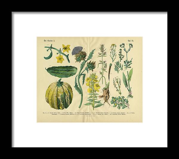 Evening Primrose Framed Print featuring the digital art Vegetables And Flowers Of The Garden by Bauhaus1000