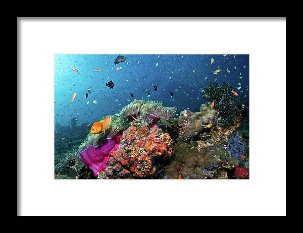 Underwater Framed Print featuring the photograph Vibrant Lives by Lea Lee
