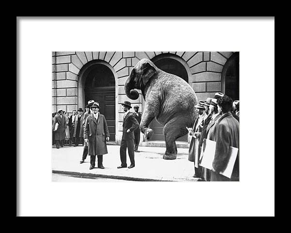 1930-1939 Framed Print featuring the photograph Victory, The G.o.p. Elephant, Stands In by New York Daily News Archive