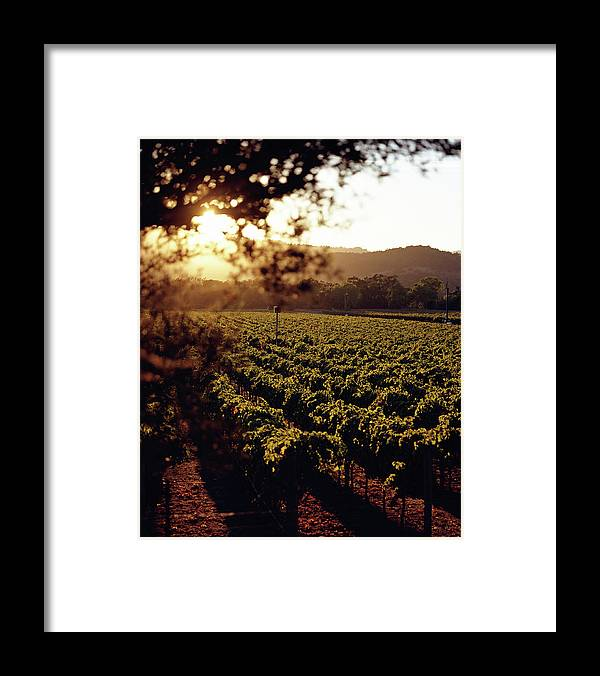 Outdoors Framed Print featuring the photograph Vineyard, Napa Valley, California, Usa by Lisa Romerein