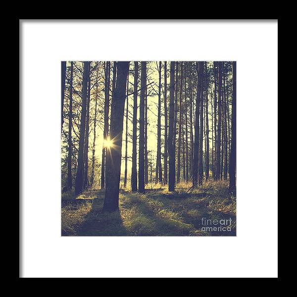 Untouched Framed Print featuring the photograph Vintage Forest Background by Nature Photos