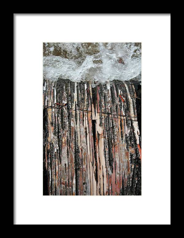 Birch Tree Framed Print featuring the photograph Water Birch Peel by Dylan Punke