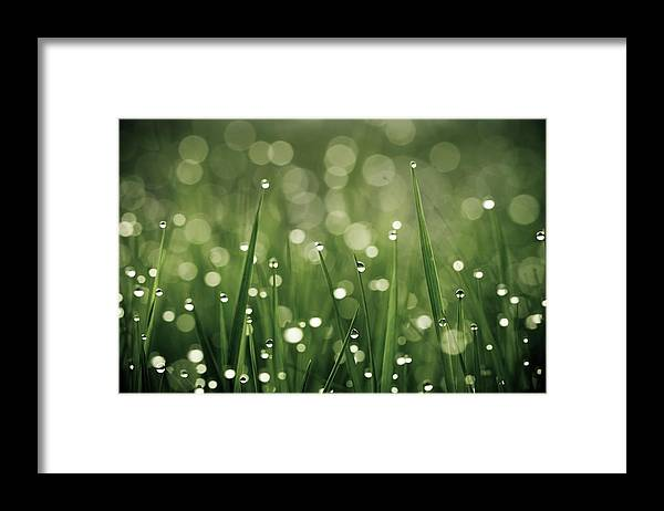Grass Framed Print featuring the photograph Water Drops On Grass by Florence Barreau