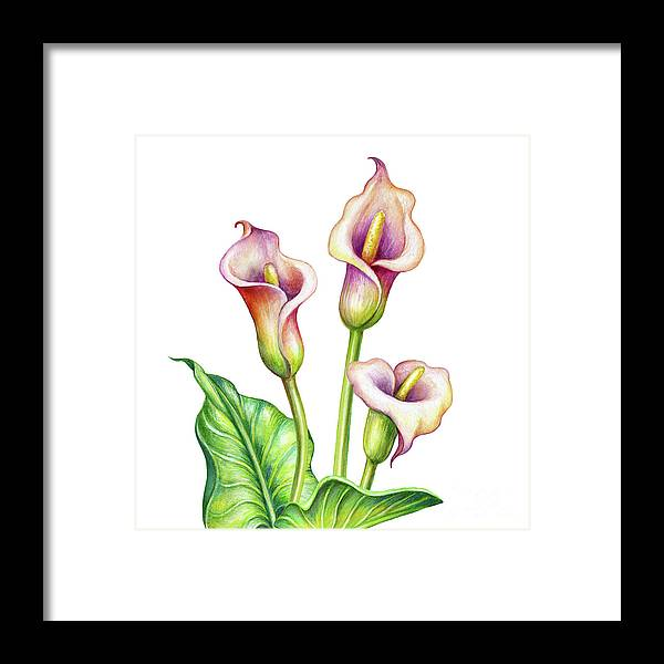 Watercolor Painting Framed Print featuring the digital art Watercolor Illustration, Calla Lillies by Wacomka
