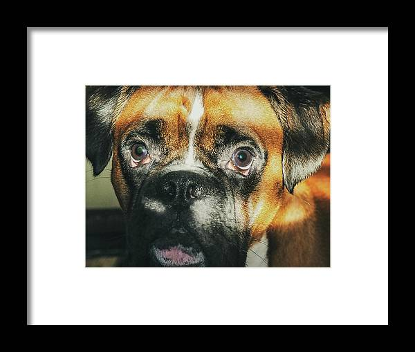Dog Framed Print featuring the photograph Where'd Everybody Go by CWinslow Shafer