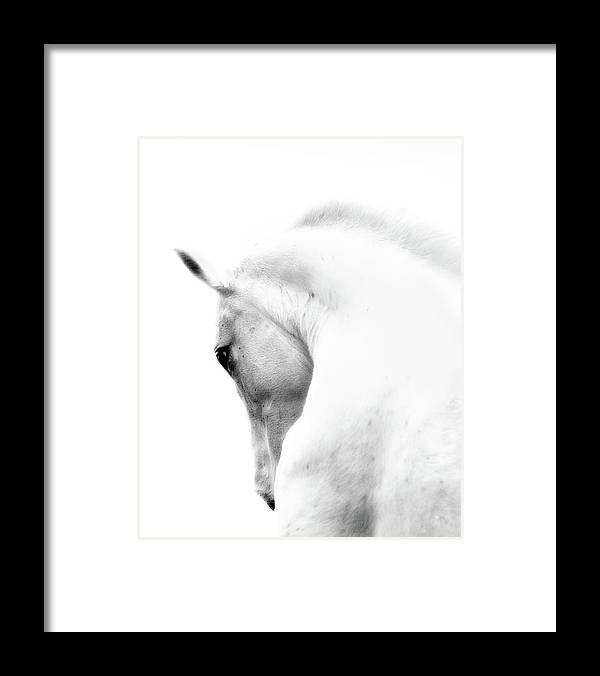 Horse Framed Print featuring the photograph White Stallion Andalusian Horse Neck by 66north