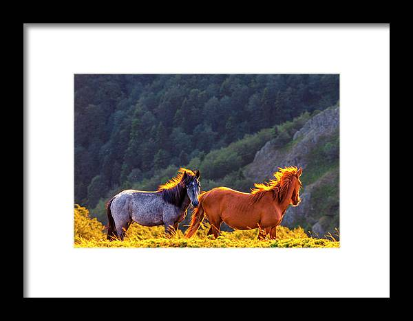 Balkan Mountains Framed Print featuring the photograph Wild Horses by Evgeni Dinev