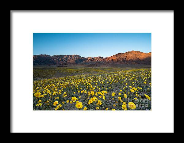 Usa Framed Print featuring the photograph Wildflower Super Bloom In Spring, Death by Phitha Tanpairoj