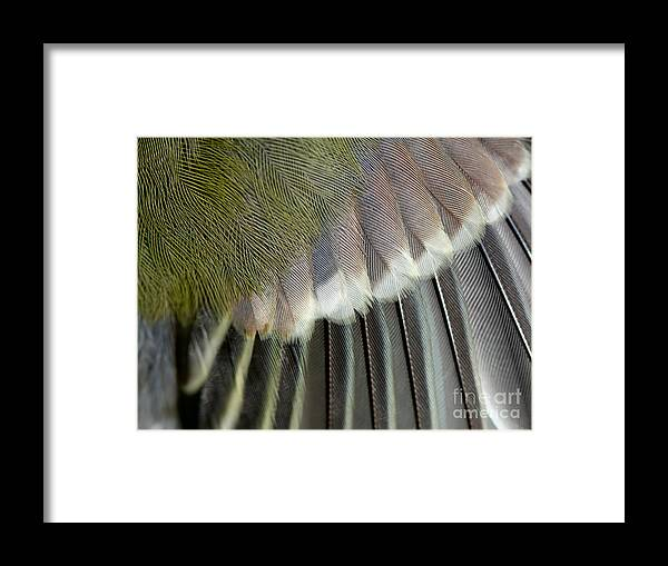 Feather Framed Print featuring the photograph Wing Of The Great Tit Close Up by Mycteria