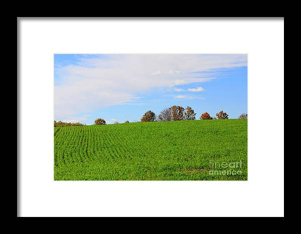 Autumn Framed Print featuring the photograph Winter Wheat In October In Southern Ontario by Louise Heusinkveld