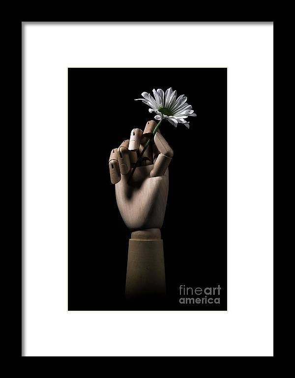 Daisy Framed Print featuring the photograph Wooden Hand Holding Flower by Edward Fielding