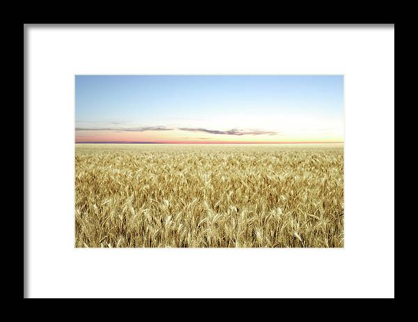 Scenics Framed Print featuring the photograph Xxl Wheat Field Twilight by Sharply done