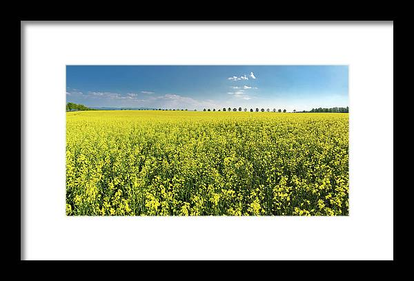 Canola Framed Print featuring the photograph Yellow Canola Field and blue Sky Spring Landscape by Matthias Hauser