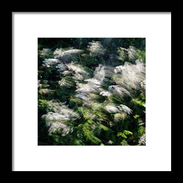 Hedgerow Framed Print featuring the photograph Dancing Hedgerow by Bear R Humphreys