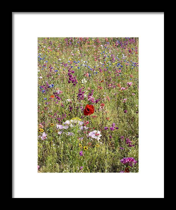 Outdoors Framed Print featuring the photograph Mixed colourful wildflowers by Lyn Holly Coorg