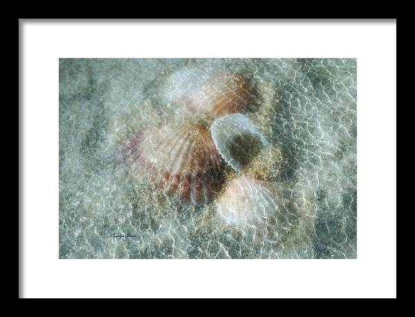Shells Framed Print featuring the photograph Step Lightly by Carolyn Staut