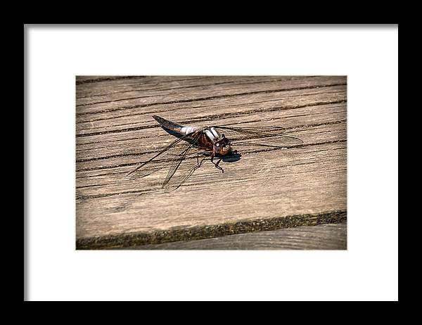 Insects Framed Print featuring the photograph 20-0609-0227 by Anthony Roma