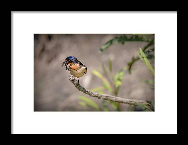 Bird Framed Print featuring the photograph 20-0616-0528 by Anthony Roma