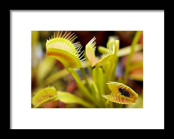 Hampton Court Flower Show Framed Print featuring the photograph The Annual Hampton Court Flower Show Is In Full Bloom by Oli Scarff