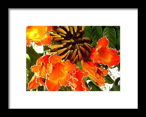Hawaii Iphone Cases Framed Print featuring the photograph African Tulip Tree by James Temple