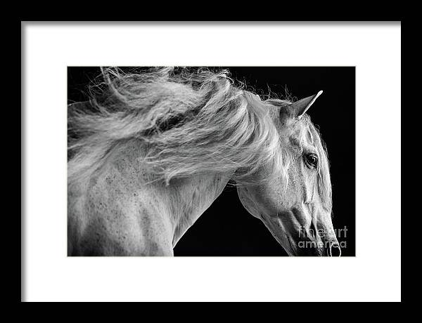 Horse Framed Print featuring the photograph Andalusian Motion by Shelley Paulson