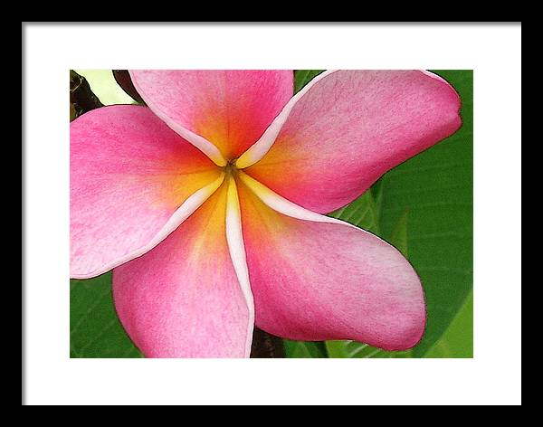 Hawaii Iphone Cases Framed Print featuring the photograph April Plumeria by James Temple
