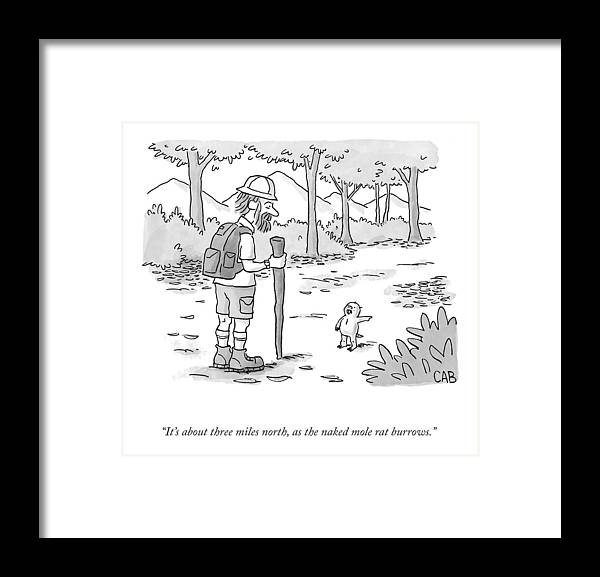 It's About Three Miles North Framed Print featuring the drawing As The Naked Mole Rat Burrows by Adam Cooper