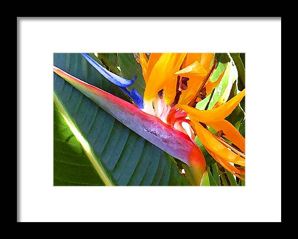 Hawaii Greeting Cards Framed Print featuring the photograph Bird of Paradise by James Temple