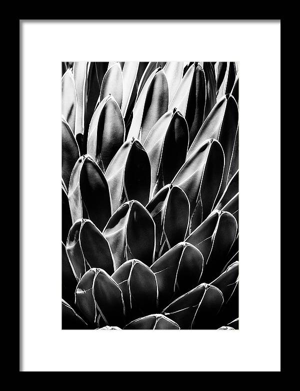 Black Arizona Series - Queen Victoria Agave by Philippe HUGONNARD