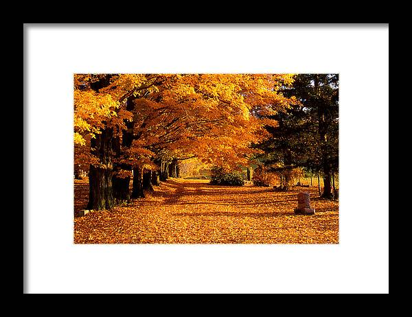 Fall Framed Print featuring the photograph Blazing Autumn Oaks by Roger Soule