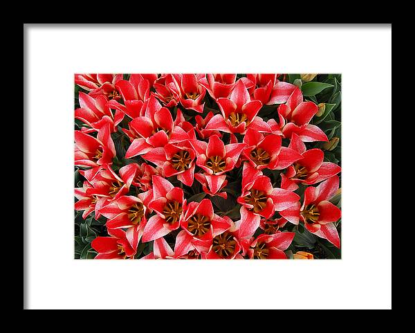 Red Tulips Arrangement Bouquet Framed Print featuring the photograph Bouquet of Red Tulips by Keith Gondron