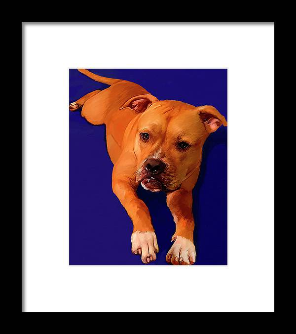 Boxer Framed Print featuring the painting Boxer Portrait by Portraits By NC