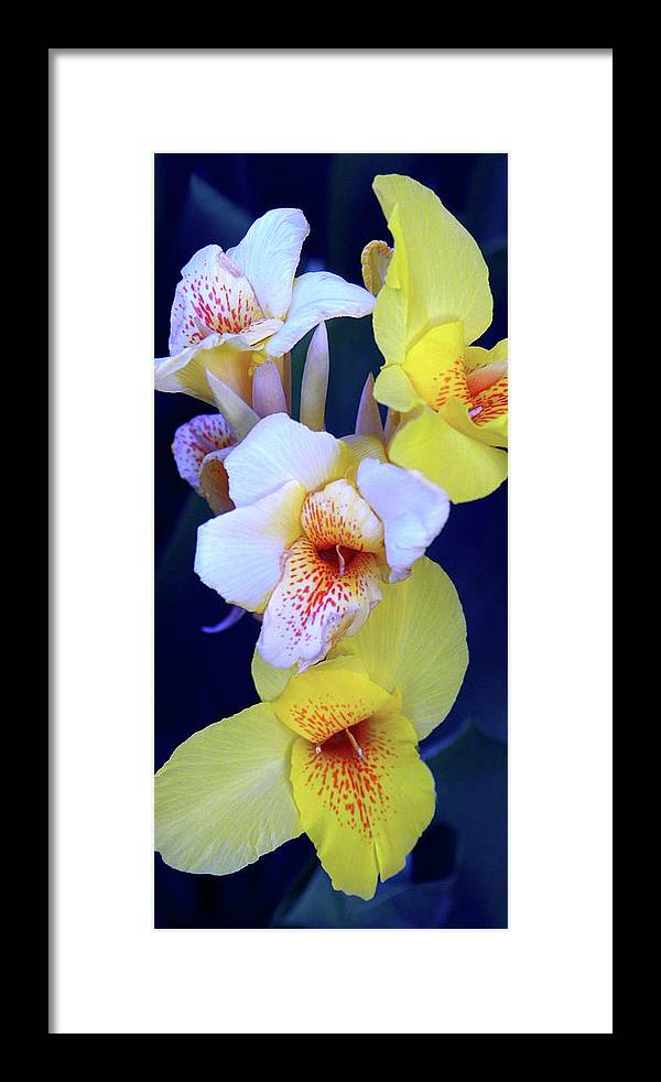 Flowers Framed Print featuring the photograph Cannas by Robert Hudnall